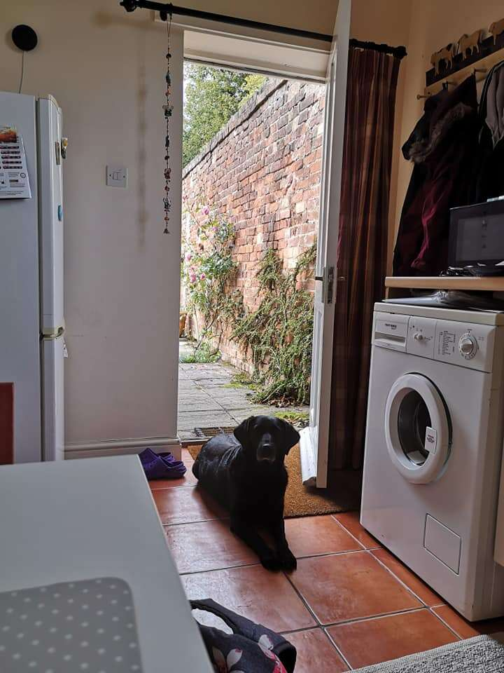 Dog visits woman every morning