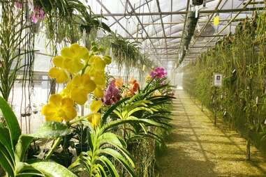 R.F. Orchids