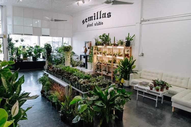 Semillas Plant Studio