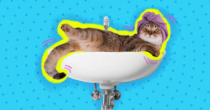 cat hanging out in sink