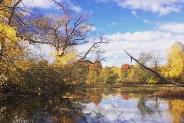Fresh Pond Reserve
