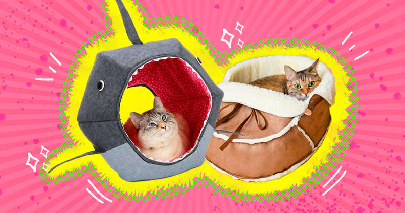 cats in unique cat beds