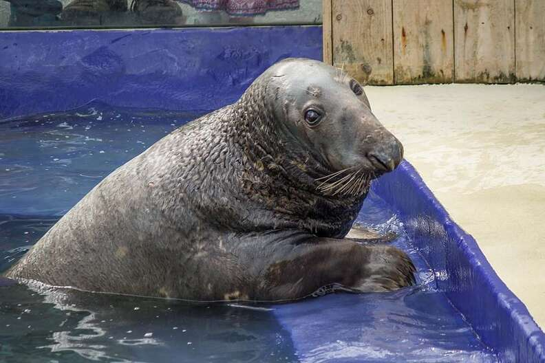 Yulelogs the rescue seal
