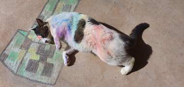 cats play in chalk