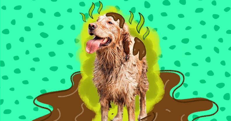 dirty dog needs a bath