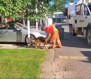 Dog and garbage truck driver are friends