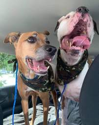Shelter dogs on their freedom ride
