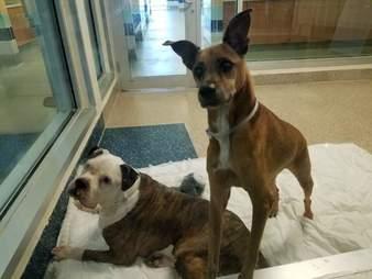 Bonded shelter dogs huddle together
