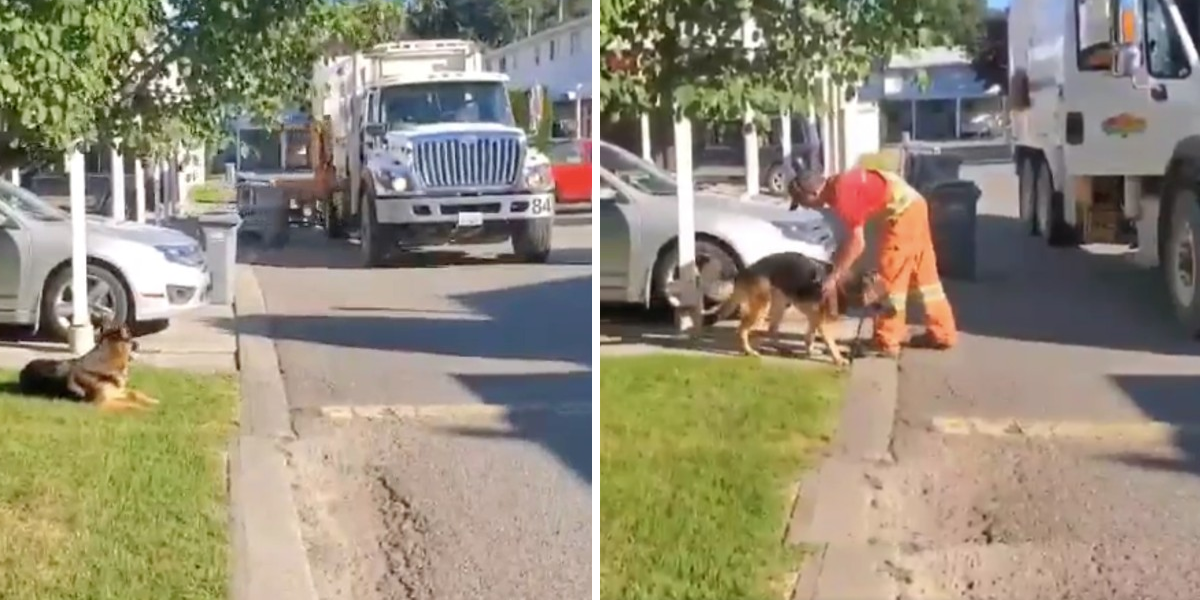 Dog Patiently Waits To Greet Garbage Truck Driver Every Week