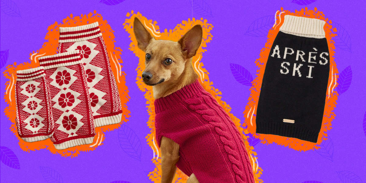The Absolute Coziest Dog Sweaters For Fall