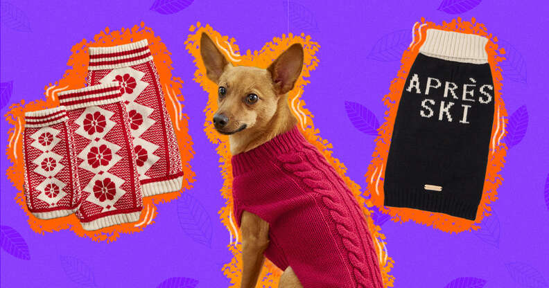 cute dog sweaters