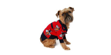 Luxury Bee Dog Sweater
