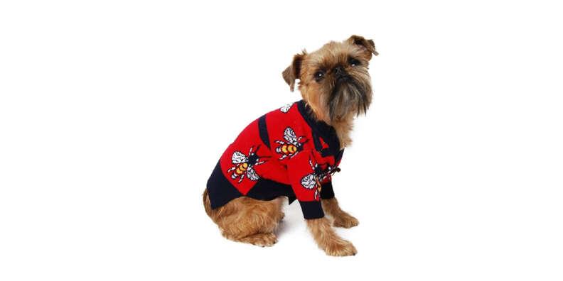 Luxury Bee Dog Sweater