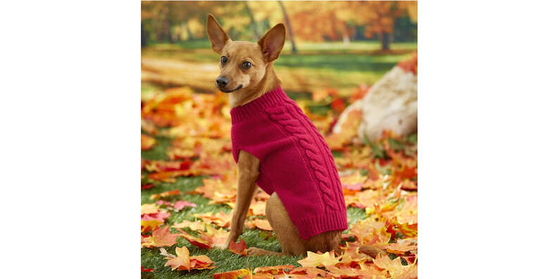 Red cable knit dog sweater
