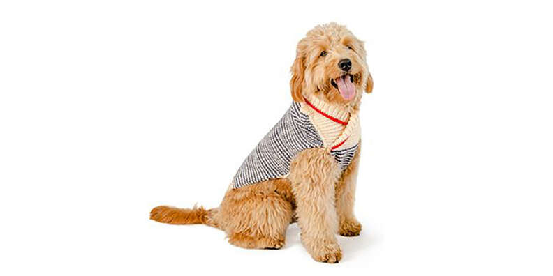 preppy dog sweater