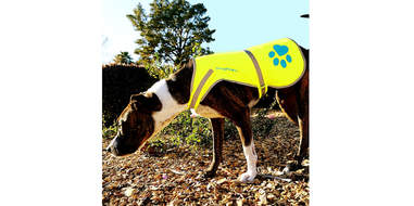 amazon dog reflective vest