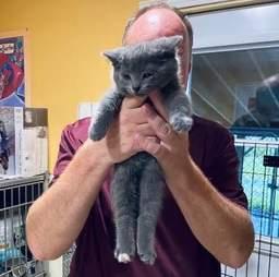 volunteer adopts kitten
