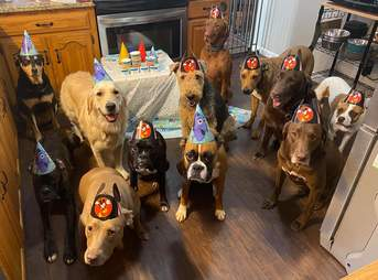 Dogs wear party hats at birthday celebration