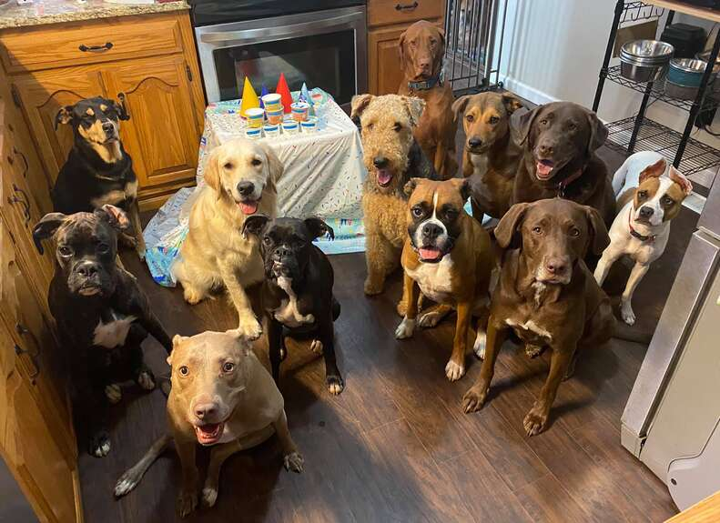 Dogs attend a birthday party