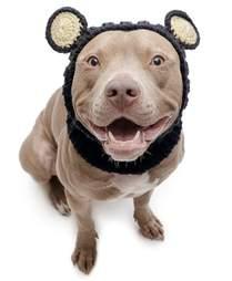 Black Bear Dog Snood