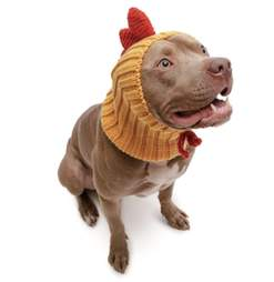 Rooster Dog Snood