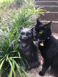 Black cat finds twin statue