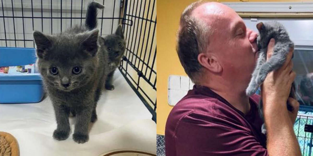 Shelter Worker Adopts Kitten Who Wouldn't Stop Meowing At Him
