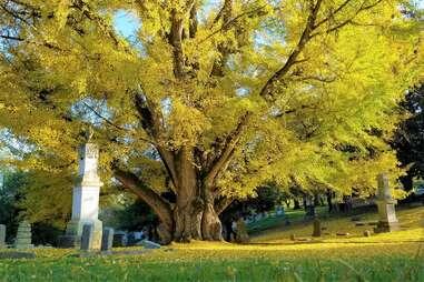 Cave Hill Cemetery & Arboretum