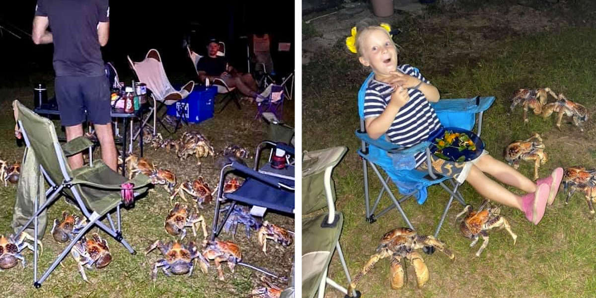 Crowd Of Giant Crabs Decides To Crash Family's Picnic
