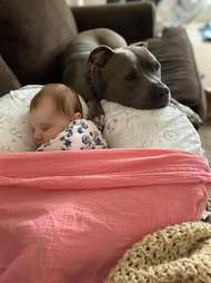 Ellie the pittie watches over her baby