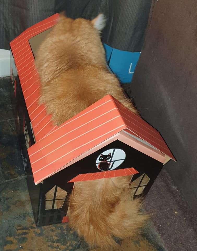 cat haunted house