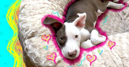Animals Matter Katie Puff Dog Bed