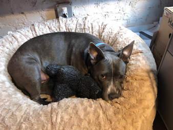 animals matter katie puff bed