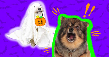 how to calm dogs on halloween