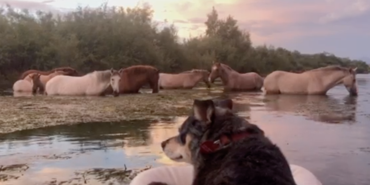 Scared Rescue Dog Is Obsessed With Watching Wild Horses Now