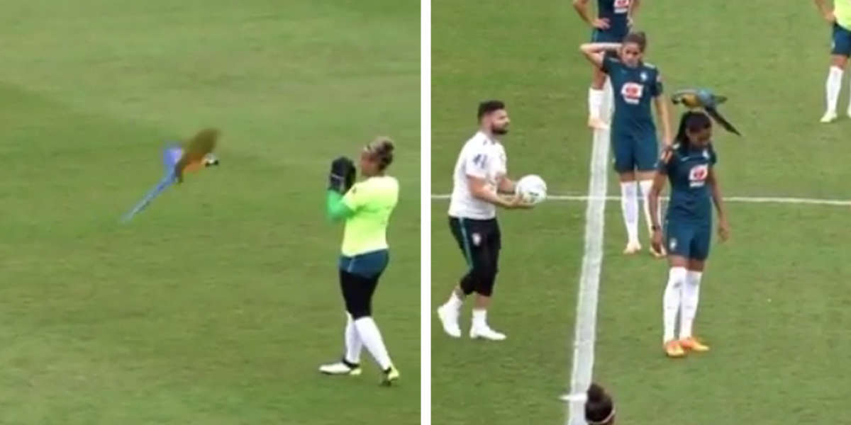 Parrot Interrupts Soccer Match By Landing On Player's Head
