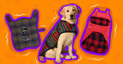 fall coats for dogs