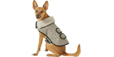 frisco manhattan dog tweed jacket