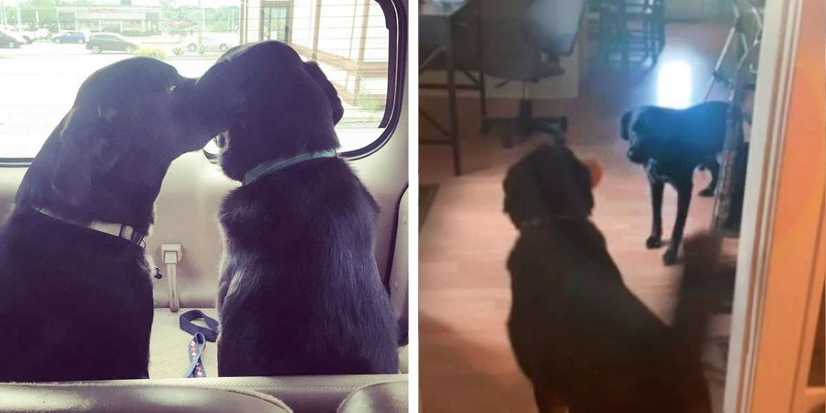 Sweet Rescue Dog Helps His Brother Overcome An Unusual Phobia