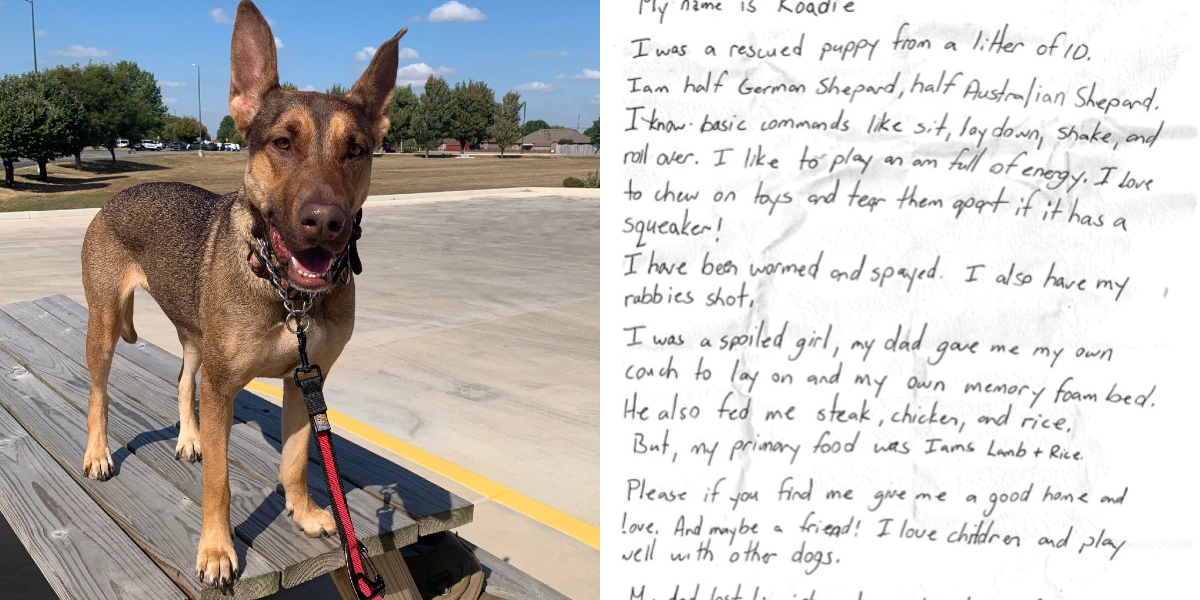 People Find A Dog With A Message In A Bottle On Her Collar