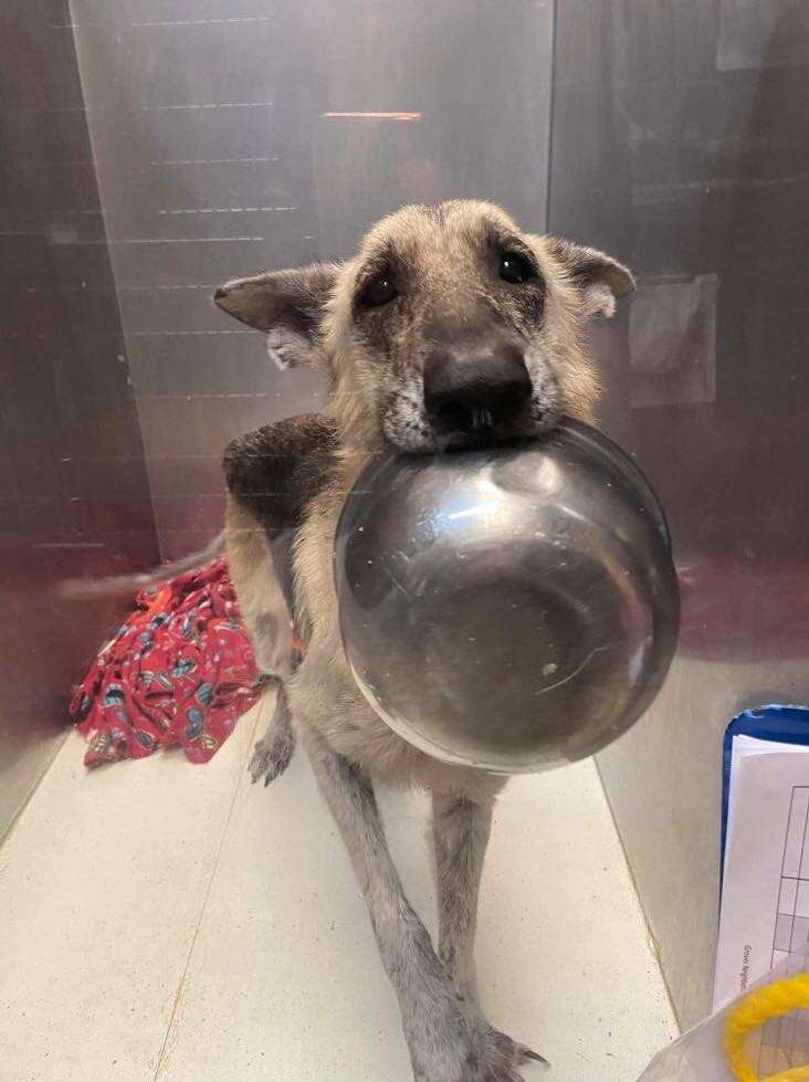 Stray dog holds up bowl asking for love
