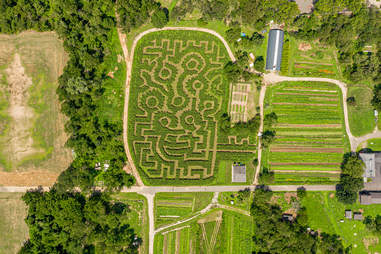 Amazing Maize Maze at the Queens County Farm Museum