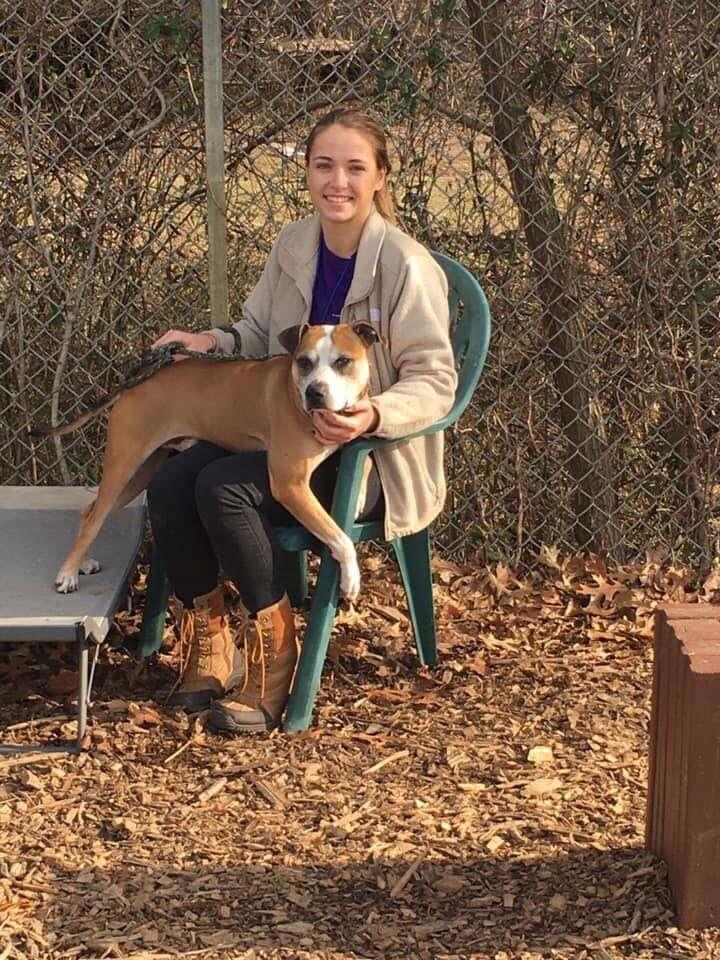 rescue dog gives hugs