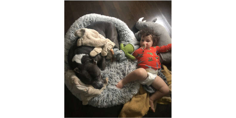 dog and baby snuggling in bed
