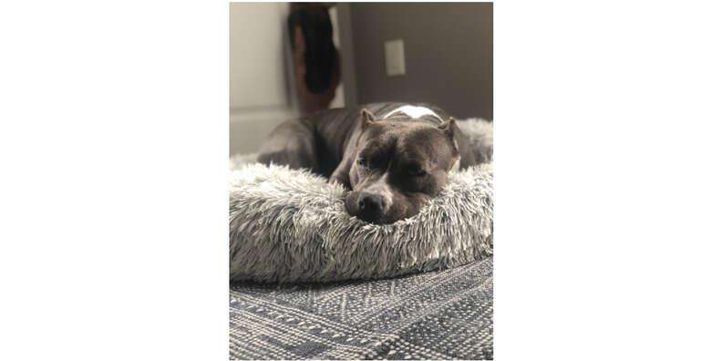 dog sleeping in cozy bed
