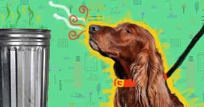 dog sniffing garbage can