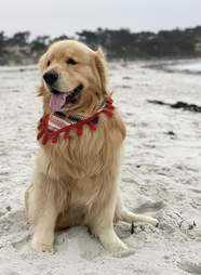 dog doesn't like waves