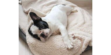 furrybaby Premium Fluffy Fleece Pet Blanket