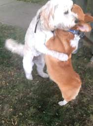 Dogs hug each other on the street
