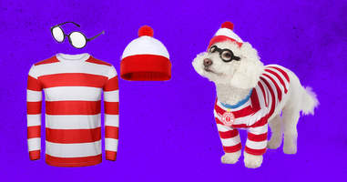 Where's Waldo? dog and adult costume